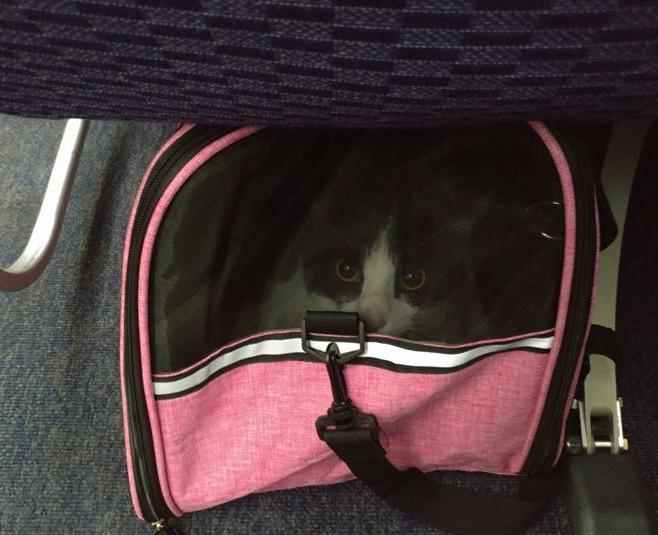 cat immigration 1