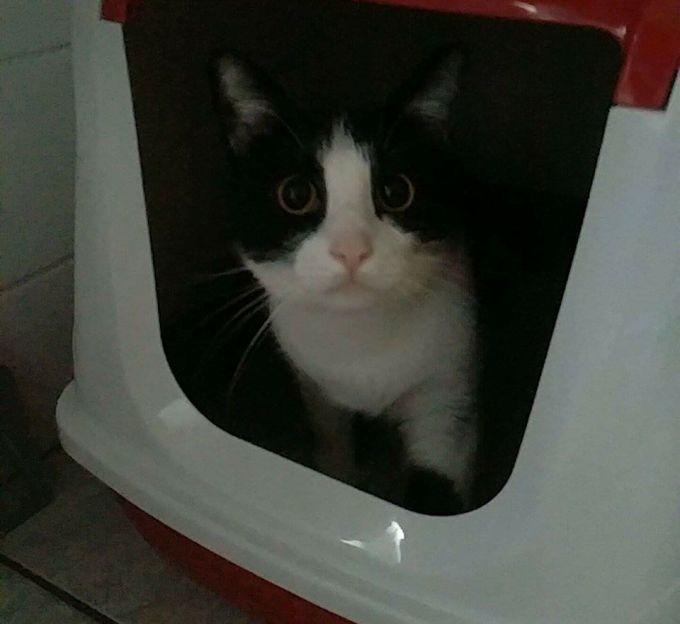 cat immigration 2
